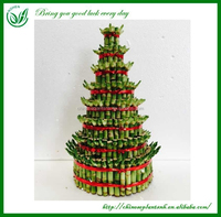 Lucky Bamboo Home Interior Decoration Items