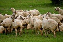 Live sheep, Cattle, Goats etc