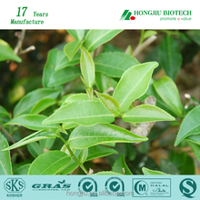 Top Quality 98% Green Tea Extract With Free Sample & Highest Quality & Competitive Price