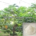 poliacrilato de potasio para la agricultura productos químicos