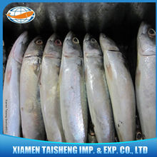 Frozen Light Caught Pacific Mackerel Price Wholesale For Baiting Fishing