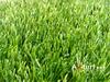 /p-detail/Pasto-c%C3%A9sped-sint%C3%A9tico-para-cancha-de-f%C3%BAtbol-300006105500.html