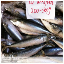 China Supplier of Frozen Fish Seafood,Mackerel Fish Hot Selling All Size