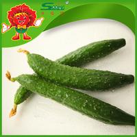 Long Cucumber, organic green vegetables and fruits cheap fresh cucumber