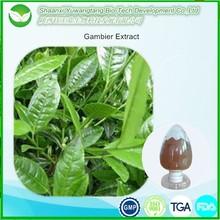 100% natural china herb uncaria gambir extract powder