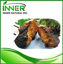 Nutritional Supplement Chaga extract /Chaga Mushroom Extract