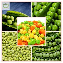 Frozen Green Pea From Factory, Frozen Vegetable
