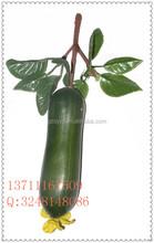 Suni köpük sebze/yüksek kalite artifiial salatalık masa dekorasyonu için