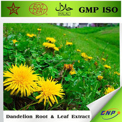 100% natural mongolian dandelion herb extract