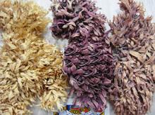 sea moss seaweed dried eucheuma spinusom at cheapest price Eucheuma dried