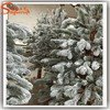 Manufacturers supply small decorative pine trees high-grade pvc artificial pine tree branches indoor decorative pine trees