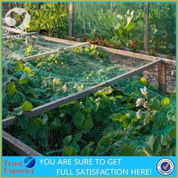 anti bird net protect grape vegetable fruit from birds attack