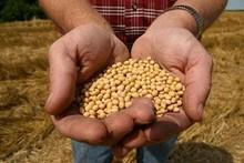 Natural Soya Beans