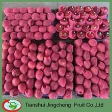 New season huaniu apple fruit price