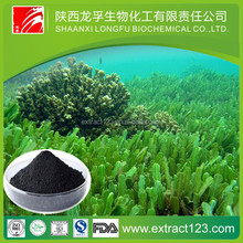 Manufacturer sales fucoxanthin seaweed extract