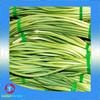 High Quality Frozen green Garlic Sprout Cuts GRADE A Details