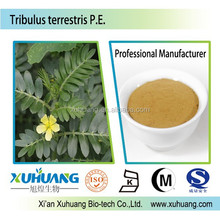For Men Health! Tribulus Terrestris Extract Increased Sexual