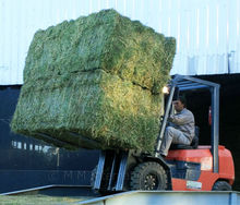 ALFALFA HAY- Fair Grade - Double Compressed Bale - 16/18 % Protein - For Sale ! Available during the northern hemisphere winter.