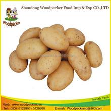 Fresh Potato / China origin potato / 2015 new crop potato