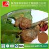 Manufacturer Supply Kola Nut Buyers