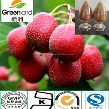 Crataegus pinnatifida hawthorn berry extract 5%-30% Flavone / 5:1,10:1,20:1