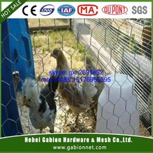hot sale Widely application chicken wire/cage mesh for chicken/Galvanized hexagonal wire netting