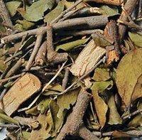 ramulus loranthi (sang ji sheng, mulberry mistletoe stems, taxillus) herbal medicines, herb slices(dispel wind-dampness)
