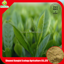 ISO Certificated Manufacture Supply High Quality Green Tea Extract/GTP 98% Powder with Reasonable Price
