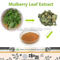 Factory supply competitive price Mulberry Leaf Extract organic herbal extracts
