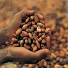 cocoa beans, ginger, coffee beans