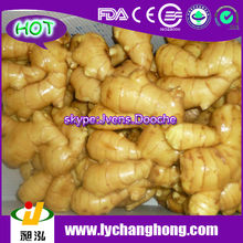 2014 High Quality New Crop Fresh Ginger For UK,CANADA,USA and EU Market