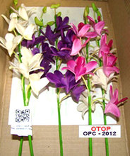Orchid cut flower from Thailand soil