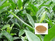 100% organic fruit best sell wholesale green tea extract softgel oem