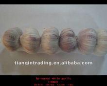 fresh white garlic seller