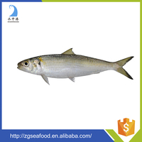 BQF Whole round Sardine Fish and food sea fish frozen sardine fish