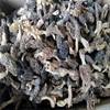 price of black morel mushroom black fungus mushroom magic mushrooms dried