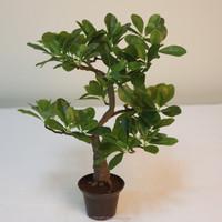 hot sale mini Japanese artificial bonsai tree artificial wide coffee bonsai leaves for home decoration