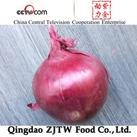 5-7cm Fresh onion ( red Onion and Yellow Onion)