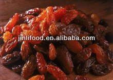 selling best high quality new arrival best price red raisin from kingland