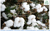 Raw cotton with seed