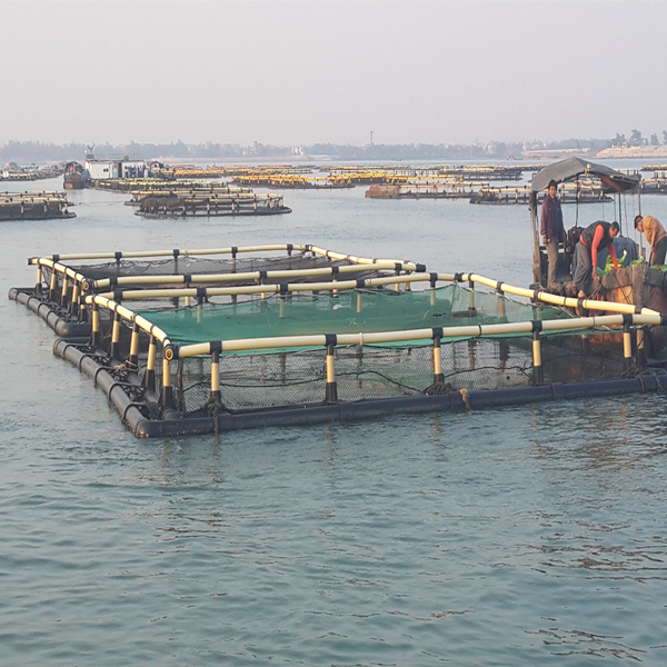 Square floating aquaculture tilapia fish farming cages for Construccion de jaulas flotantes para tilapia