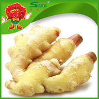 Fresh Ginger in China