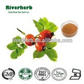GMP Manufacture Natural Rosehip Extract 5% Vitamin C