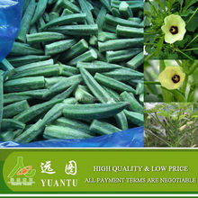 China Frozen Okra With Factory Price