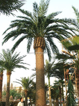 artificial palm tree indoor decoration house /hotel palm tree canada