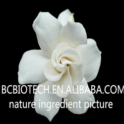 Natural High Power Gardenia Yellow with best price