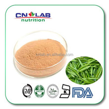 High quality hot sale product Green tea extract powder