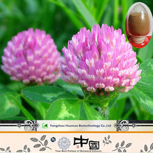 herbal extract isoflavones powder natural red clover extract