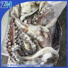 Hot sale frozen giant squid filled giant squid