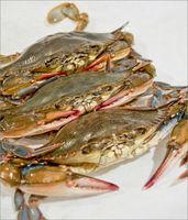 Live Soft Shell Crab